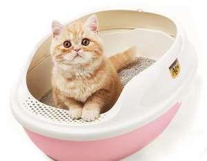 猫咪爱用猫砂 特色解析介绍